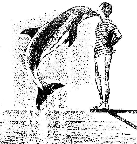 Рис. 16. 'Поцелуй' дельфина